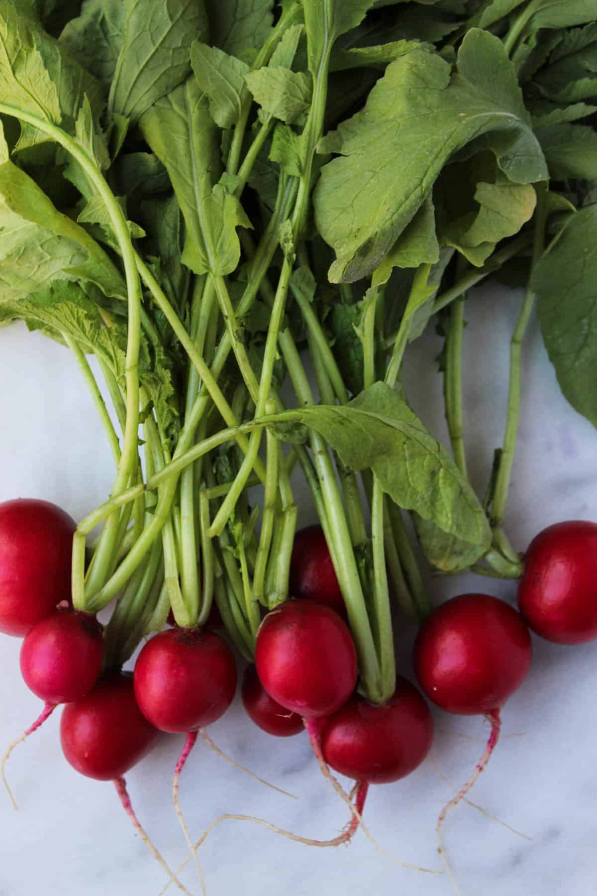 A bunch of radishes and their stems on a white counter top.