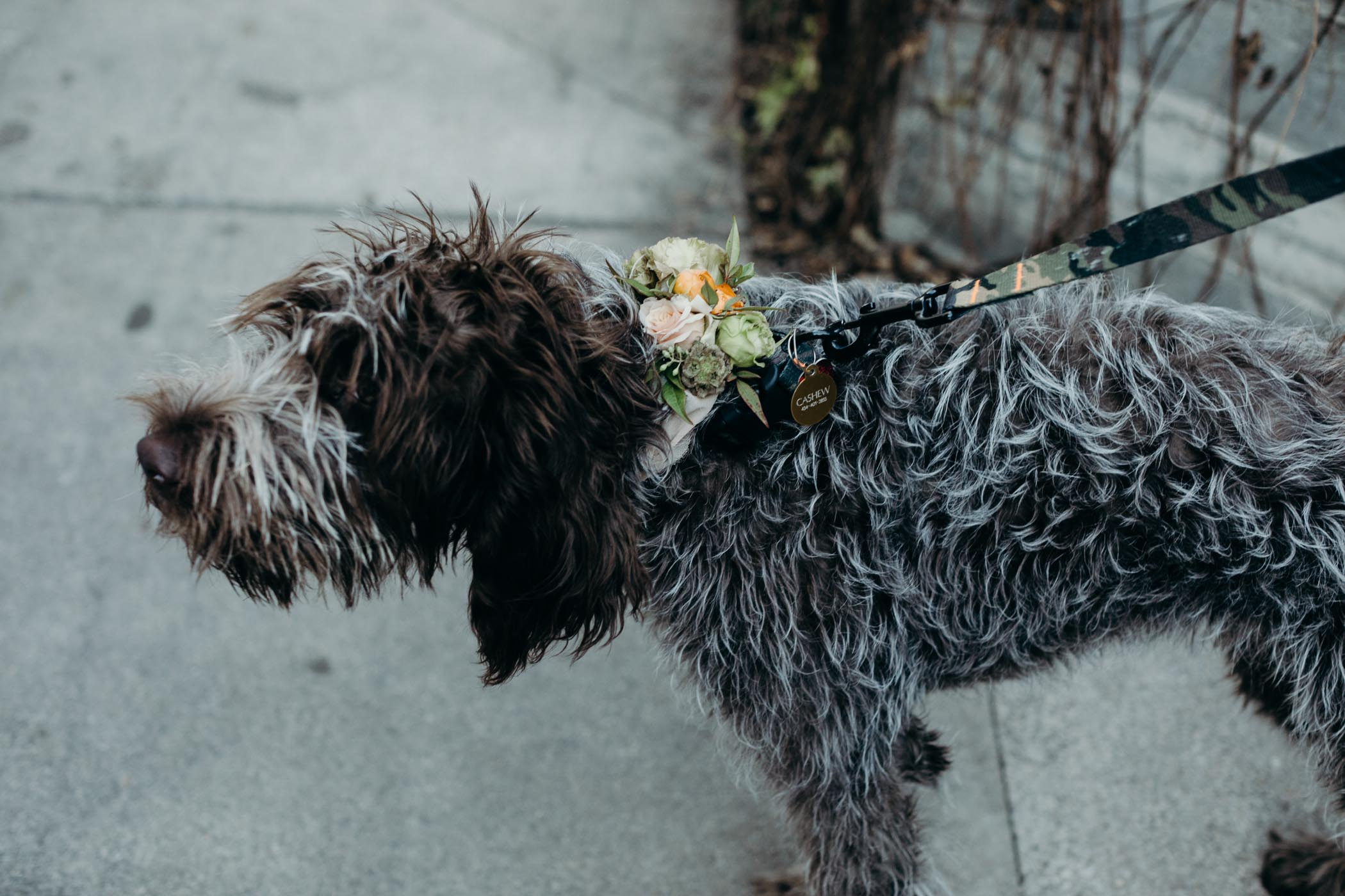 Wirehaired pointing griffon with flowers around his neck.