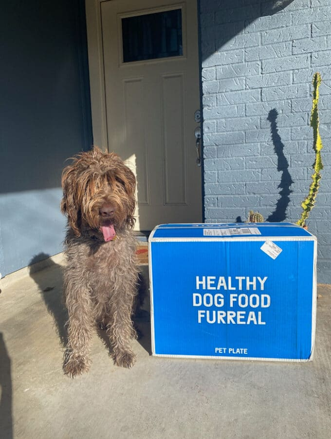 Dog sitting next to a pet plate delivery box outside at the front door.