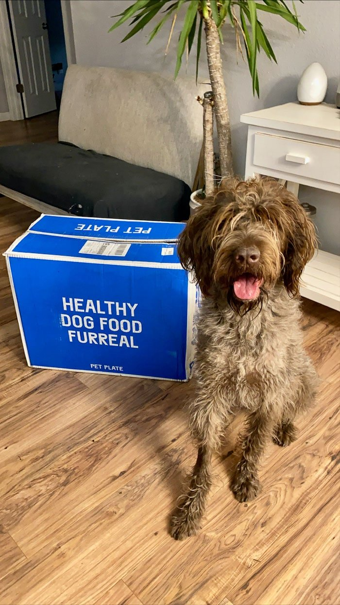 Wirehaired Pointing Griffon sitting with it's tongue out next to a box that says 'healthy dog food furreal'.